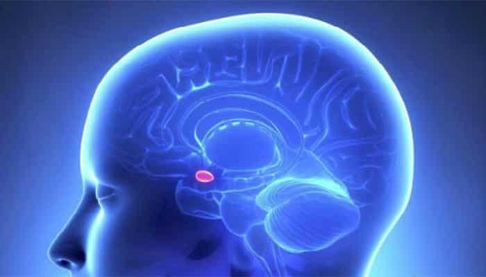7 Hobi Ini Buat Otak Makin Pintar