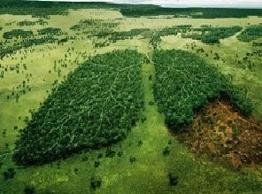 Jaga Hutan Untuk Masa Depan